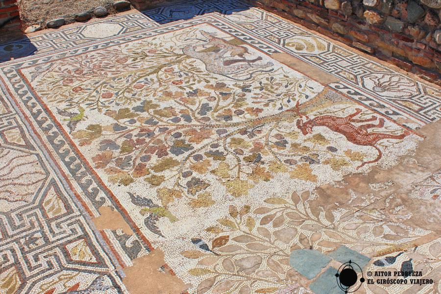 Mosaicos del yacimiento de Heraclea Lyncentis