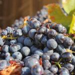 Bodegas de vino en Macedonia